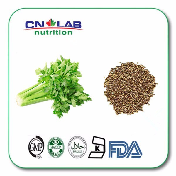 Supply High Purity Celery stalk extract with Favourable Price