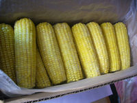 wholesale freezing sweet corn