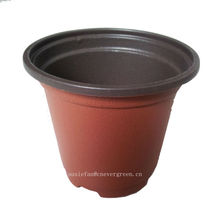 trade assurance barley plant container