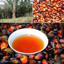 Pure crude palm Malaysia cooking oil with the lowest price