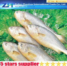 frozen fish, frozen yellow croaker for market