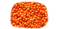Red Football Lentils