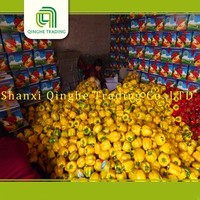 wholesale red pepper colored capsicum yellow with high quality