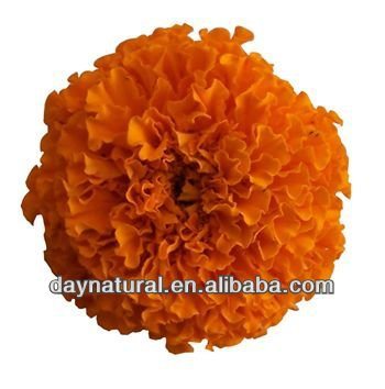 lutein powder extract/marigold extract lutein powder