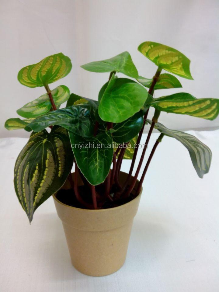 Hot sale miniature flower pots plant mini flower pot 2015 What are miniature plants grown in pots called