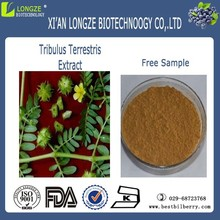 tribulus terrestris extract powder 60 saponins UV