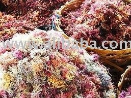 Dried Seaweeds