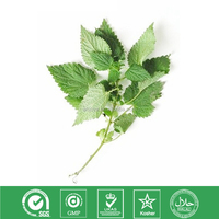 Urtica dioica /smartweed Natural nettle seed extract