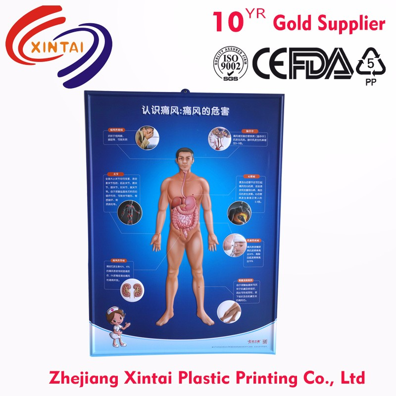3d chart poster/ pvc embossed chart/ medical wall chart