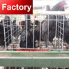 Direct factory galvanized ladder type chicken breeding cage for wholesales