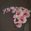 Tianjin factory flower making artificial orchid flower