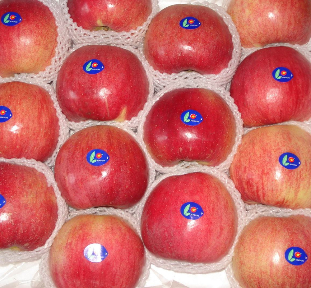 High quality new crop Washington Red Delicious Apples
