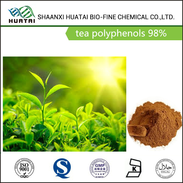 anioxidant phytochemicals green tea extract green tea polyphenols 98% powder