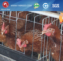Laying Chicken Farm Equipment for egg broiler chicken breeded