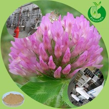 Red clover tea isoflavone 8% red clover extract