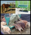agricultural equipment automatic livestock sheep and goat and horse feeders