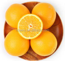 Sweet and Juicy fresh orange fruit supplier