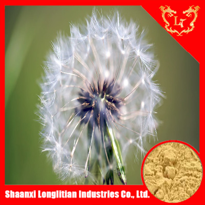 100% natural dandelion root extract powder ,as for diuretic