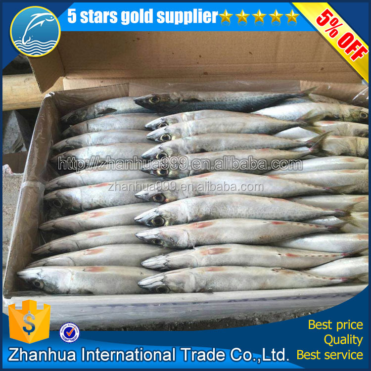 Fresh China export frozen horse mackerel fish frozen jack mackerel
