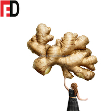 Factory wholesale Fresh dried powder ginger buyers price. organic selling ginger