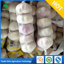 China factory red skin garlic importers in malaysia