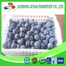 frozen fruit fresh bulk iqf blueberry fruit