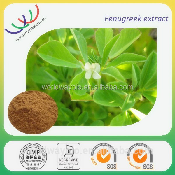 Strengthen kidney function improve sexual performance Fenugreek seed extract / fenugreek extract