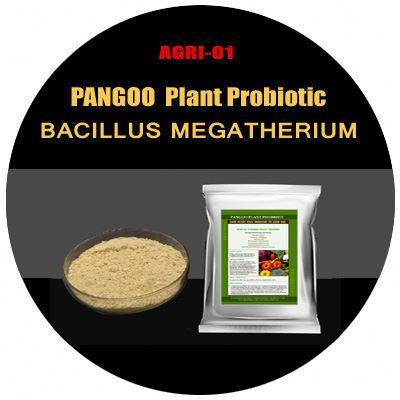 Plant growth promoting rhizobacteria AGRI-01 Plant Grower soil amendments for vegetables