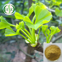 GMP Factory Supply Ginkgo Biloba Leaf Extract