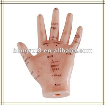 ISO Human Hand Acupuncture Model 13cm HR-509,acupuncture hand model