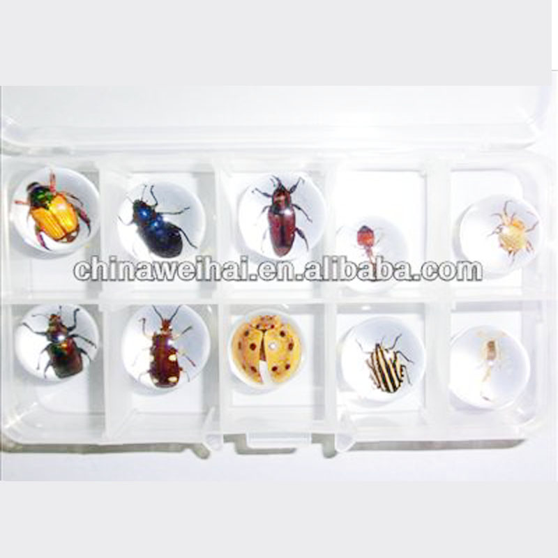 real insect marbles resin