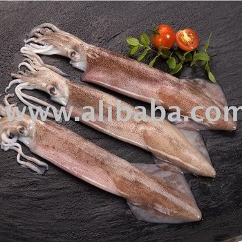 Whole Squid (Loligo Gahi)