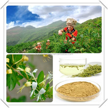high quality honeysuckle extract powder/sweetberry honeysuckle extract/honeysuckle flower bud extract