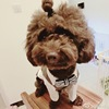 England style gentlemen cotton plaid two-piece suit dog clothing accessories supplier