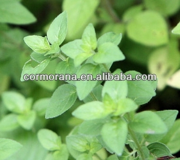 High quality oregano essential oil 60%, 80%, 90%, 95% Carvacrol