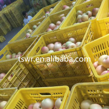 China fresh fruit green gala apple for sale