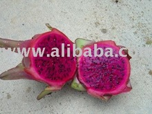 Dragon Fruits & Dragon Fruit Plants