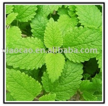 Lemon Balm extract(Flavones)