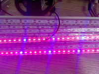 plant grow waterproof LED bar light red and blue 20161116638A
