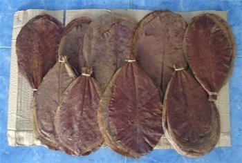 100 Dried Indian Almond Leaves Plus Free Shipping