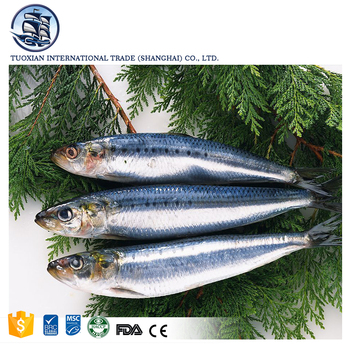 Whole round frozen bonito fish seafood wholesale