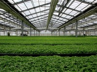 commercial Hot sale high quality greenhouse plastic film