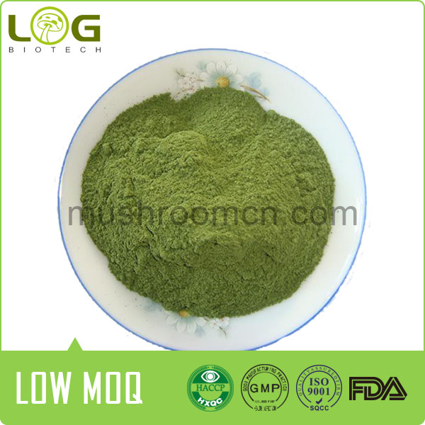 Frozen Dry Wasabi Rhizome Powder For Spices Or Pharmacy