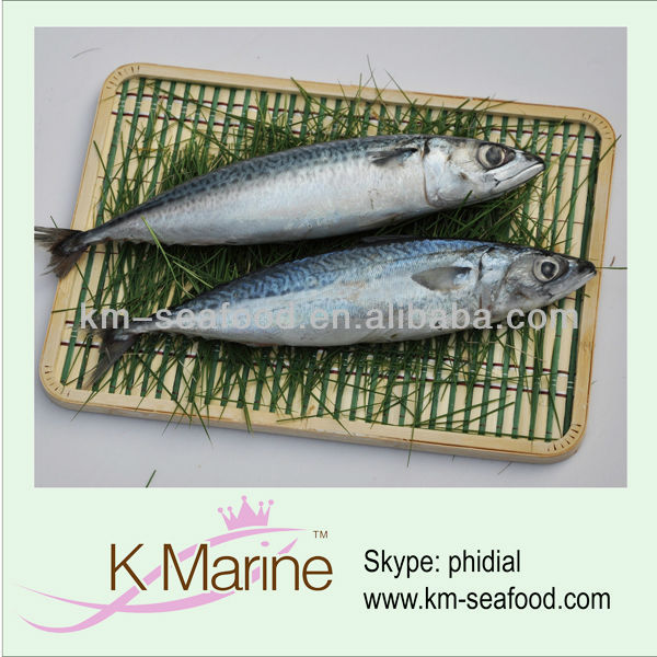 Seafood product mackerel fishing season