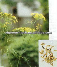 Naturl Foeniculum Vulgare/Fennel Seed Extract powder