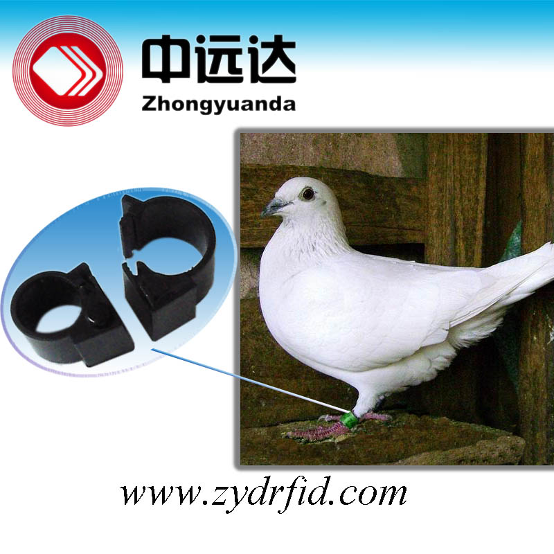 pigeon rings for sale,pigeon chip rings,rings for pigeon