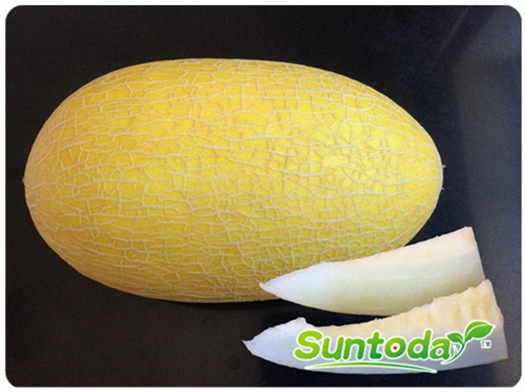 Suntoday white flesh melon seeds(11010)