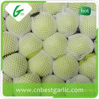 Wholesale china fresh green apple prices