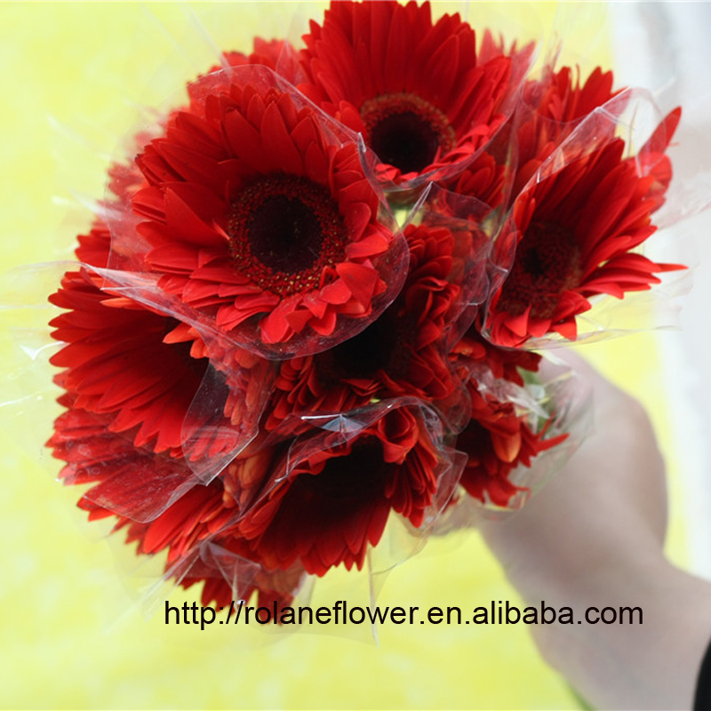 wholesale tropical fresh cut mum flowers single head gerbera from kunming