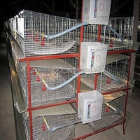 Uganda Poultry Farm Automatic Broiler Chicken Layer Cage